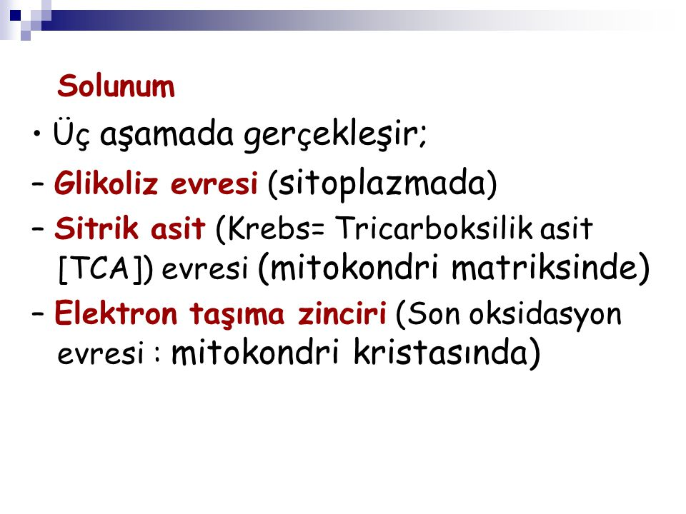 Solunum • Üç aşamada gerçekleşir; – Glikoliz evresi (sitoplazmada) – Sitrik asit (Krebs= Tricarboksilik asit [TCA]) evresi (mitokondri matriksinde)